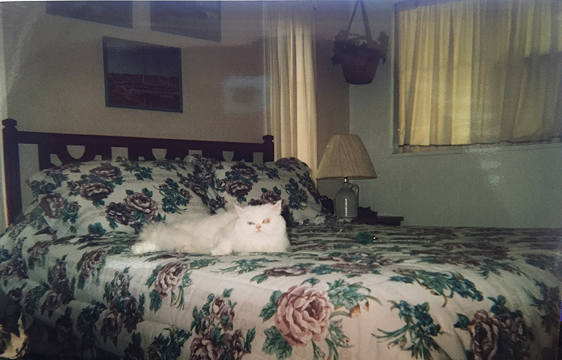 Floral Bedspread With A White Cat Laying On It.