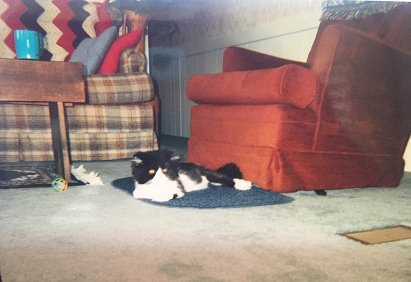 Cat Laying On Carpet In Front Of An Orange Chair And A Plaid Couch.