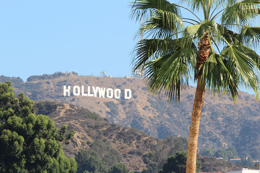 Palm Tree In Front Of The Hollywood Sign.