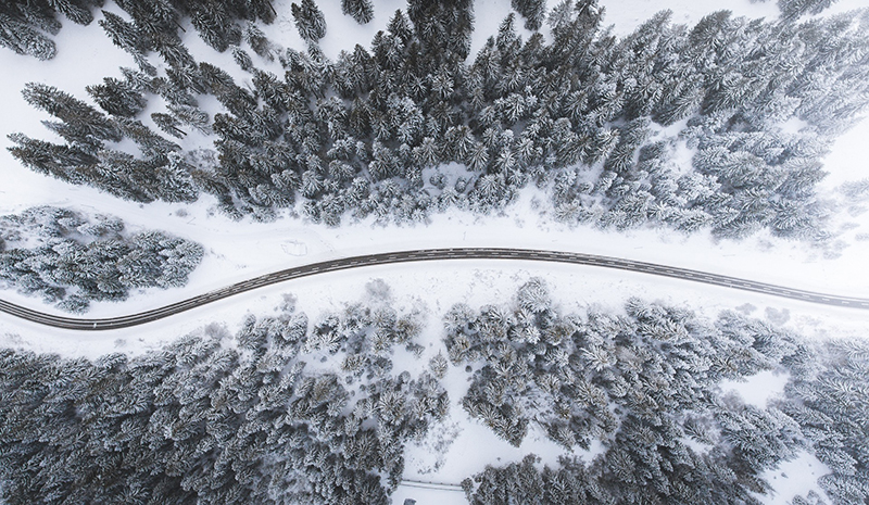a road in a snowy forest